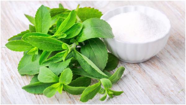 stevia manufacturers in India