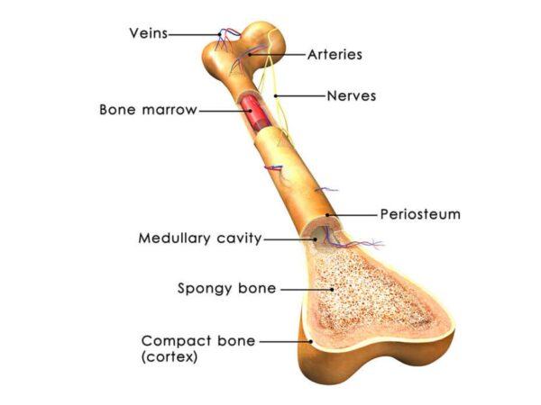 Bone Marrow Transplantation Treatment