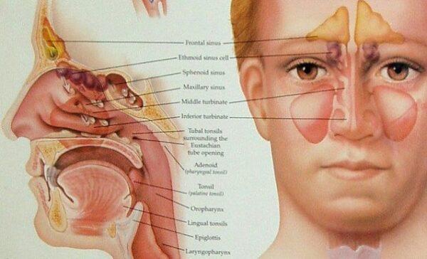 nasal air filters