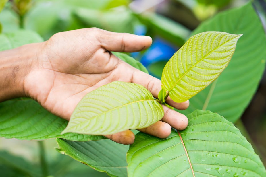 Kratom Effects On The Body