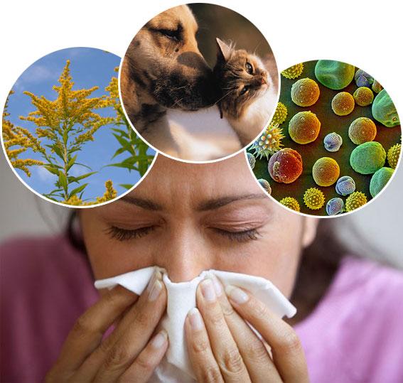 pediatric allergist
